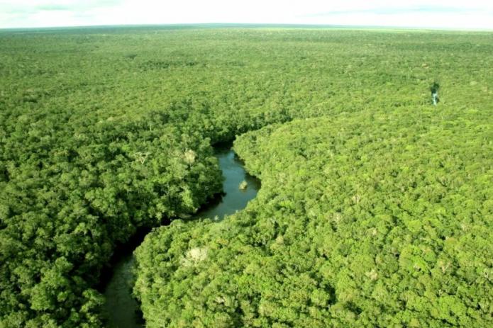 Почему массовое озеленение может нанести вред?