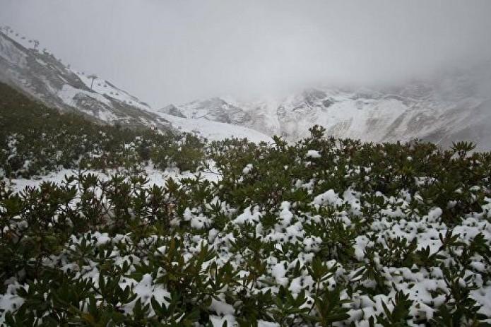 Во многих районах Узбекистана завтра ожидается снег