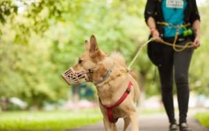 Как быть владельцам собак в период карантина?