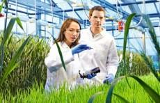 В Узбекистане будет создан Нидерландский Центр агротехнологий