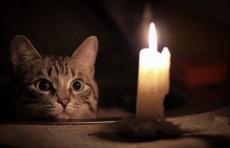 5 июня в некоторых районах Ташкента отключат свет